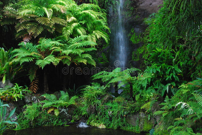Arbusto secreto no jardim de Eden imagem de stock royalty free