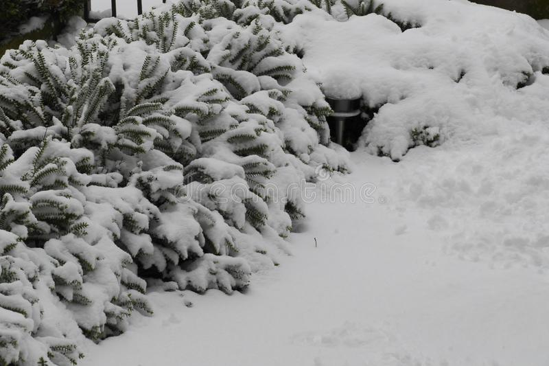 Arbusto sob o lote da neve imagens de stock royalty free