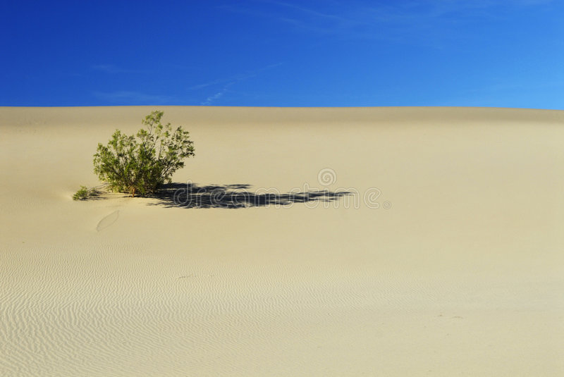 Arbusto solitário do deserto em Death Valley foto de stock royalty free