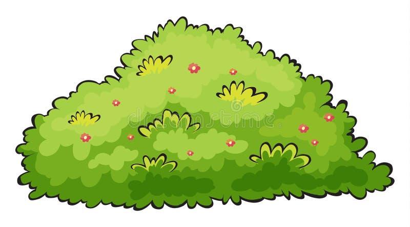 Arbusto verde stock de ilustración