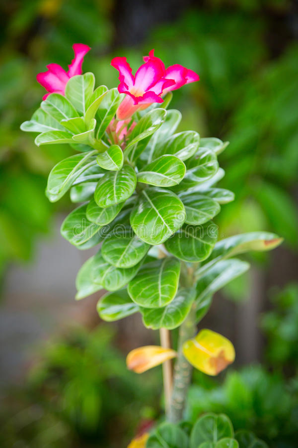 Arbusto verde com flores vermelhas fotos de stock royalty free