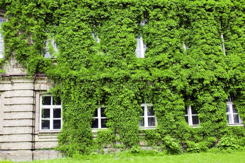 Arbusto verde en un edificio fotografía de archivo libre de regalías