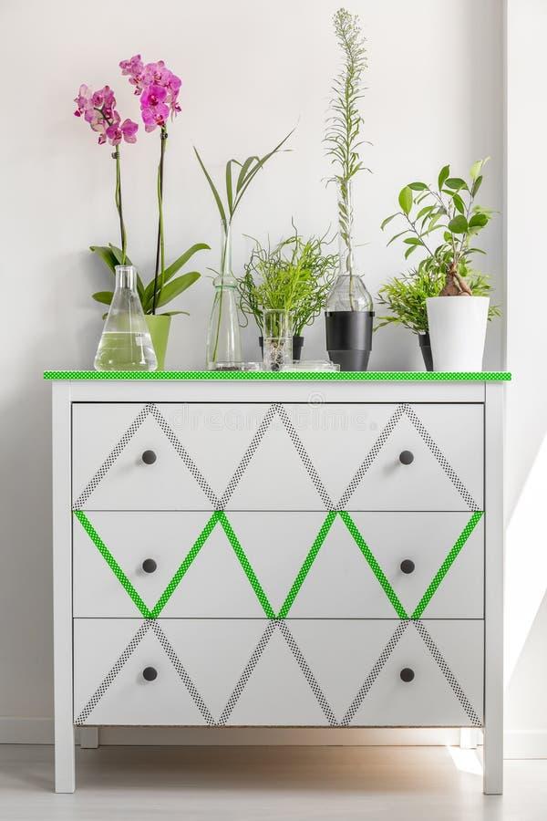 Arbusto verde en una cómoda blanca imagen de archivo libre de regalías