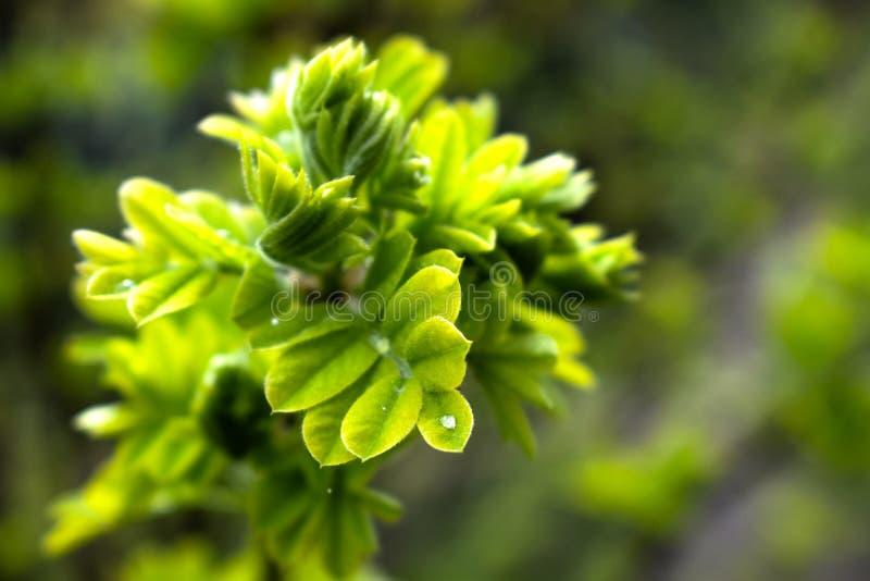 Arbusto verde vibrante imagen de archivo libre de regalías