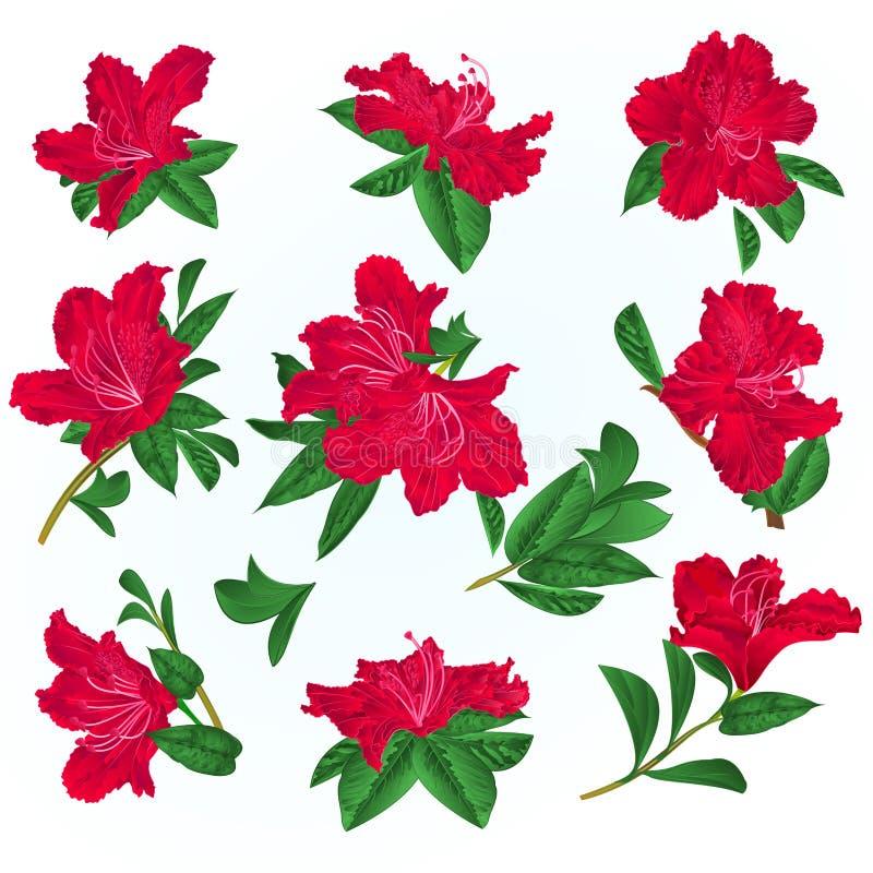 Arbusto vermelho da montanha dos rododendros e das folhas das flores em uma ilustração azul do vetor do vintage do fundo editável ilustração stock