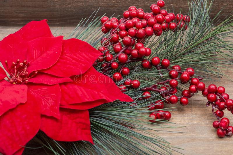 Arbusto vermelho de florescência da poinsétia, do pinho e da baga do feriado na madeira imagem de stock