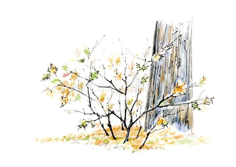 Arbusto y árbol del arce Otoño Bosquejo de la caída de la hoja stock de ilustración
