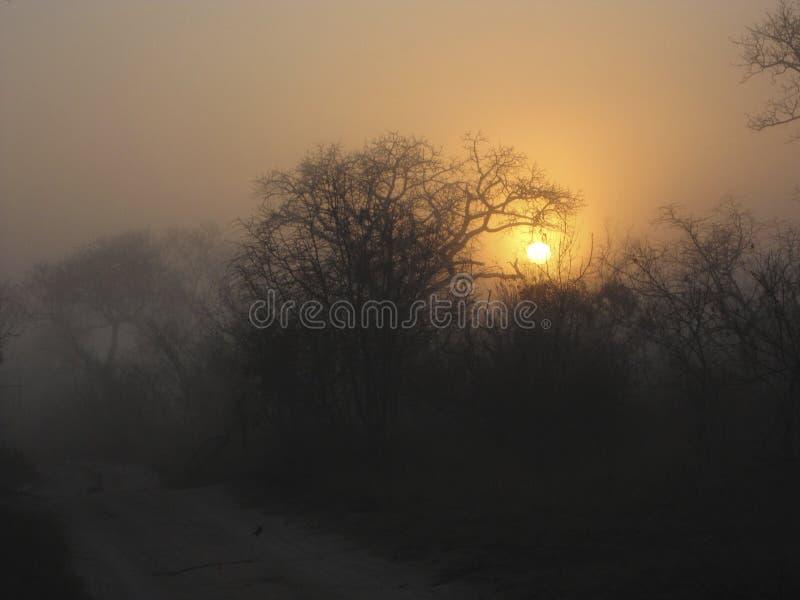 Arbusto y árboles africanos imagen de archivo