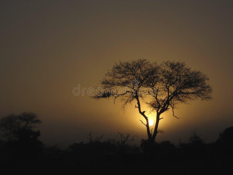Arbusto y árboles africanos foto de archivo libre de regalías