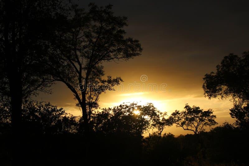 Arbusto y árboles africanos fotografía de archivo