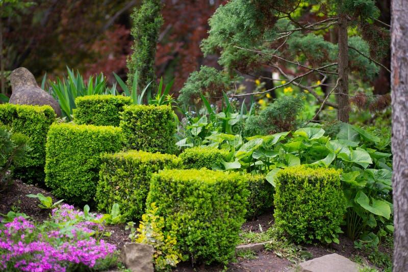 Arbustos belamente aparados do buxo ao arboreto entre várias plantas exóticas fotos de stock