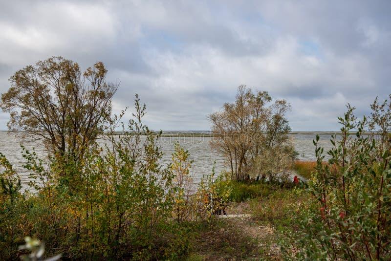 arbustos coloridos da mola no campo letão imagens de stock