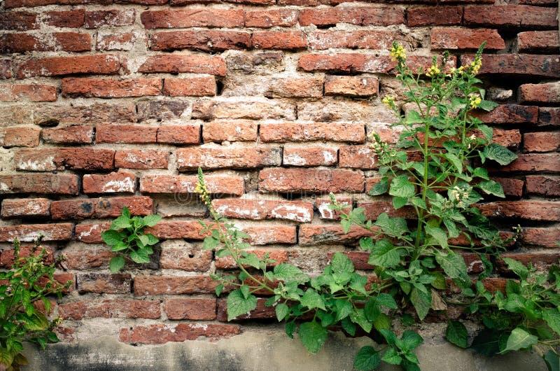 Arbustos con el viejo fondo de la pared de ladrillo fotos de archivo