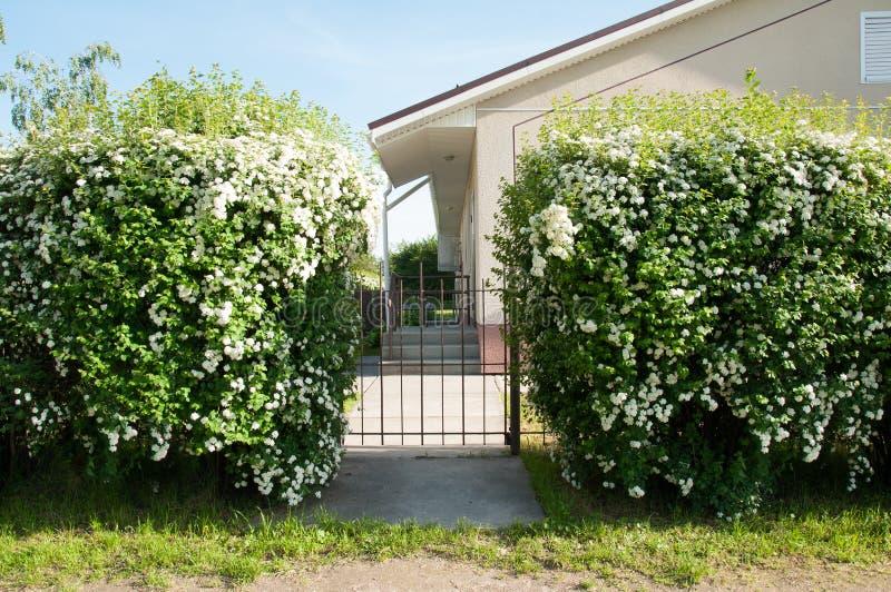 Arbustos con las flores cerca de la casa D?a de verano hermoso foto de archivo