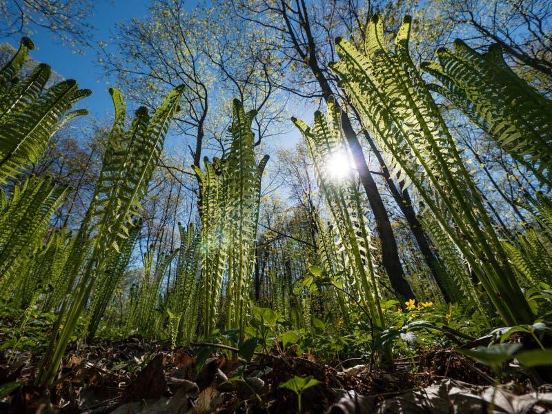 Arbustos da samambaia no dia ensolarado imagem de stock royalty free