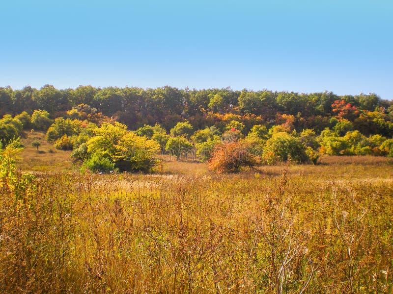Arbustos das árvores da paisagem do outono com folha amarela e vermelha e grama seca no primeiro plano foto de stock royalty free