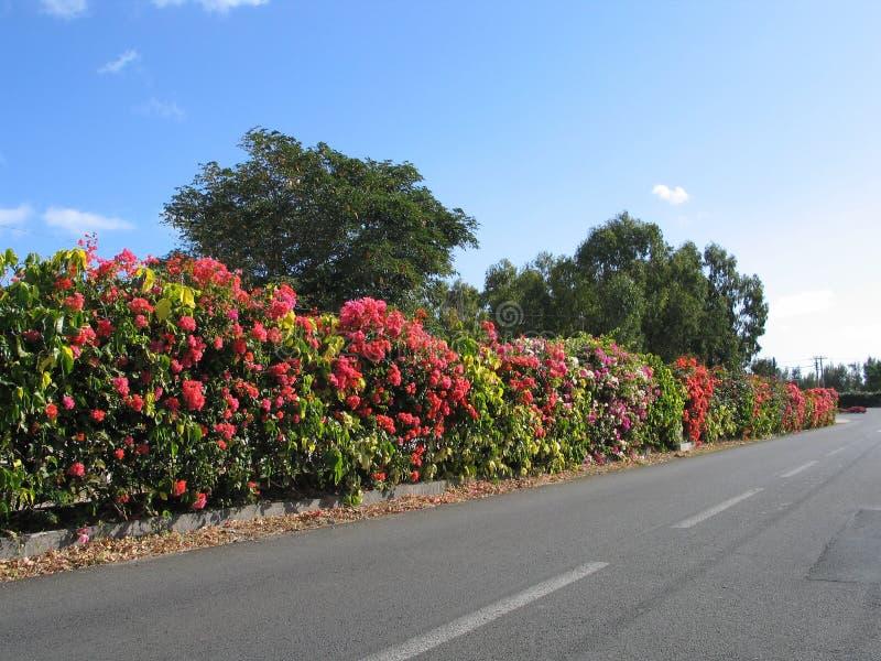 Arbustos De La Frontera Foto de archivo libre de regalías
