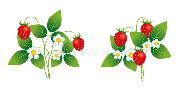 Arbustos de morango ilustração royalty free