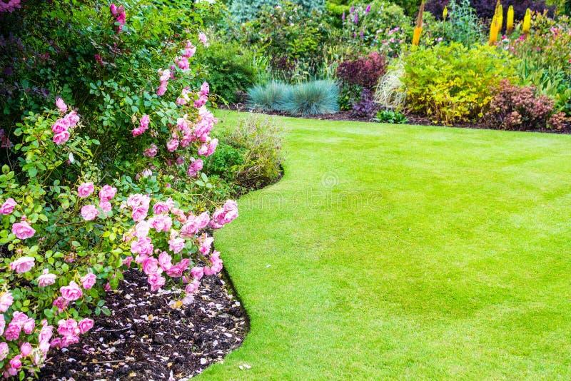 Arbustos de rosas rosas claros preciosos en jardín del victorian imagen de archivo