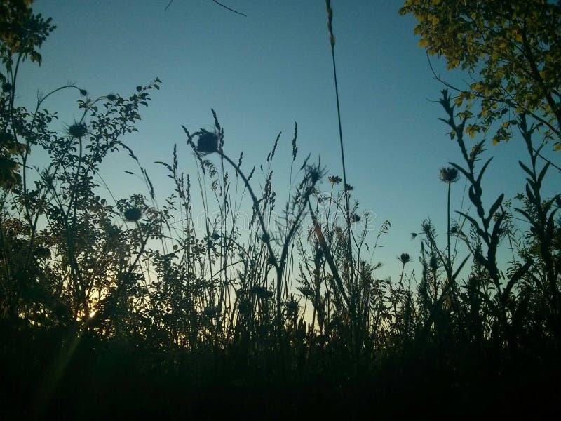 Arbustos do por do sol fotografia de stock