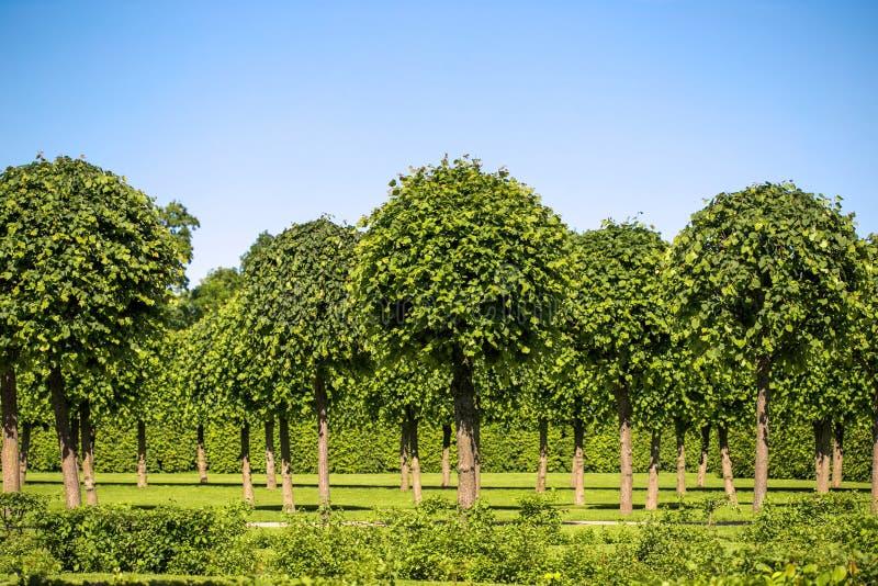 Arbustos e árvores verdes do gramado no parque foto de stock