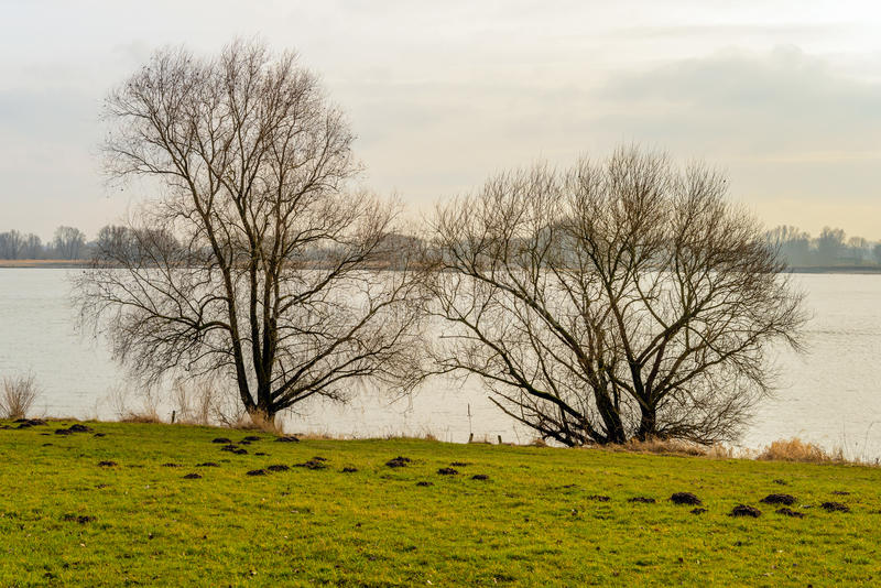 Arbustos en el banco de un río ancho foto de archivo libre de regalías
