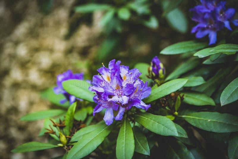 Arbustos florecientes del parque de Praga Pruhonice donde el ojo mira fotos de archivo