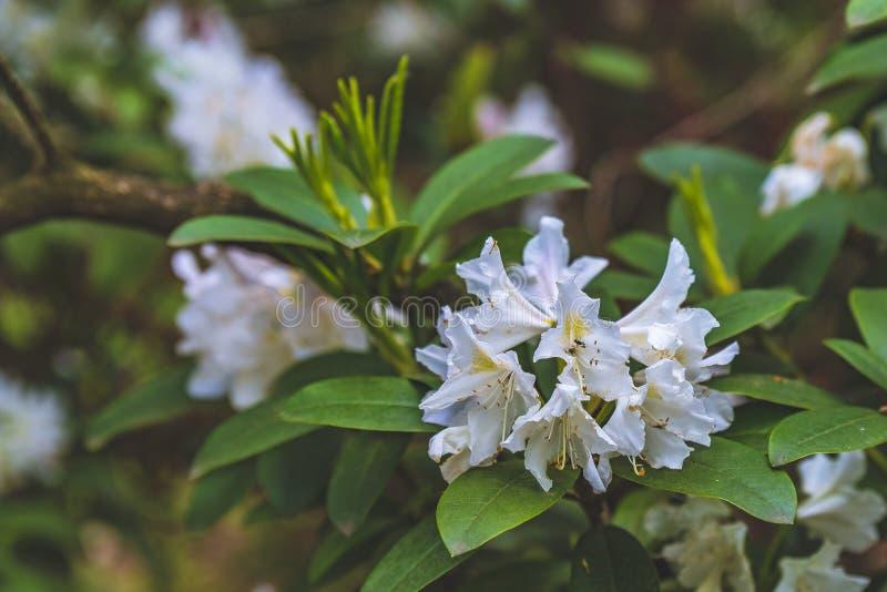Arbustos florecientes del parque de Praga Pruhonice donde el ojo mira foto de archivo libre de regalías