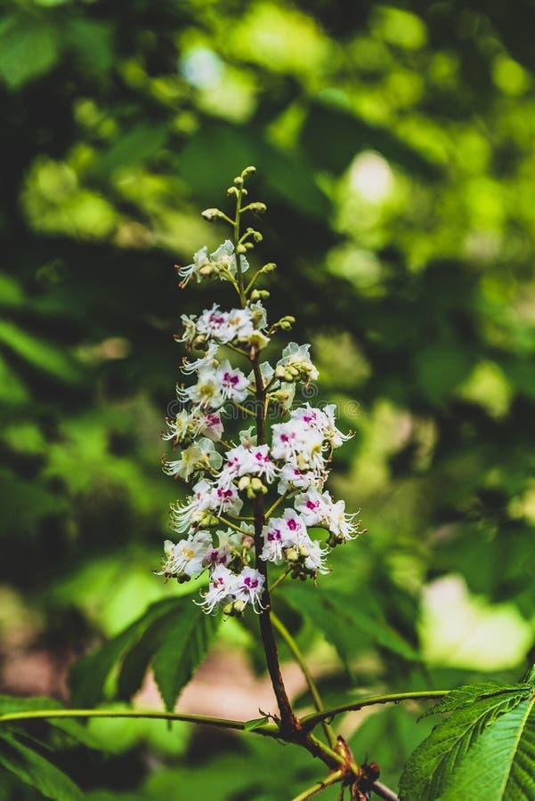 Arbustos florecientes del parque de Praga Pruhonice donde el ojo mira imagenes de archivo