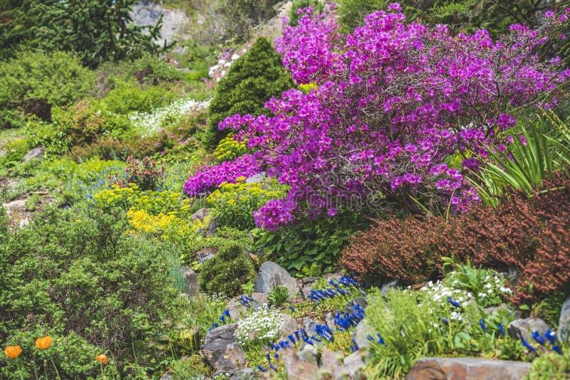 Arbustos florecientes del parque de Praga Pruhonice donde el ojo mira foto de archivo