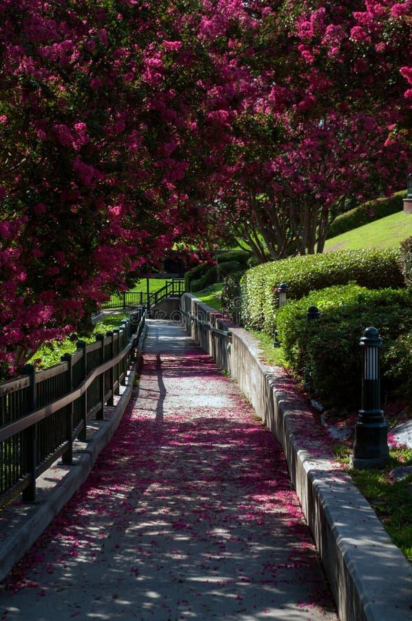 Arbustos florecientes en el Riverwalk en Augusta Georgia fotos de archivo