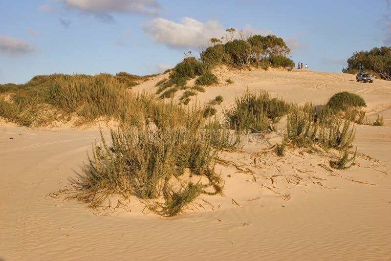Arbustos na areia imagens de stock