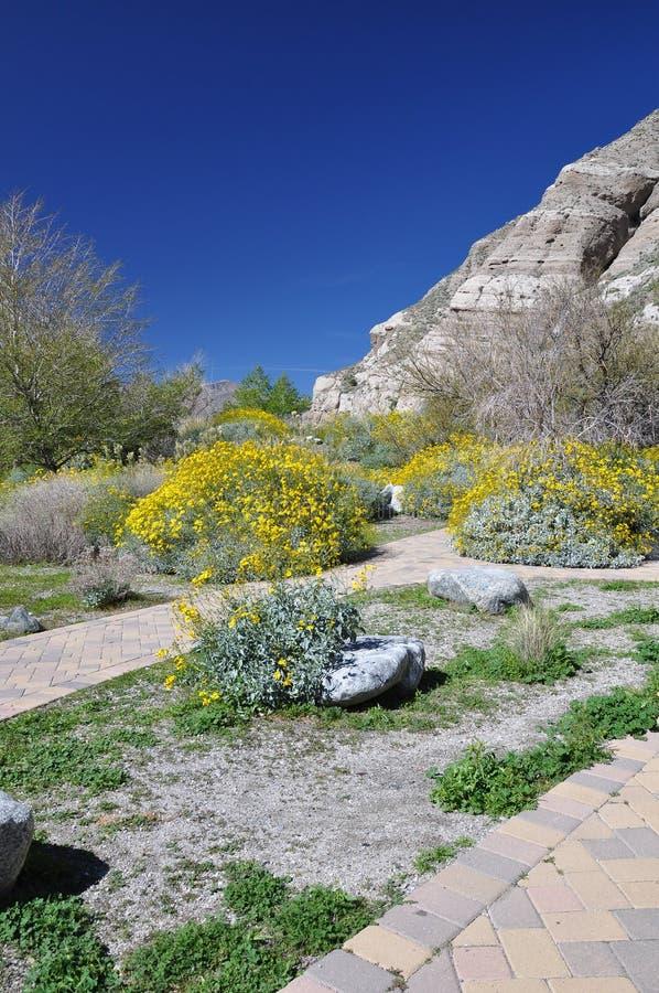 Arbustos no deserto imagem de stock royalty free