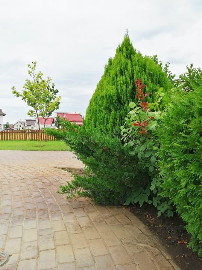 Arbustos ornamentales Camino en el parque en la distancia en casa imagenes de archivo