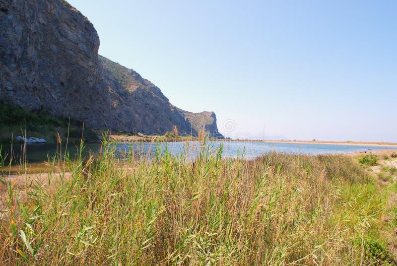 Arbustos pelo lago imagens de stock