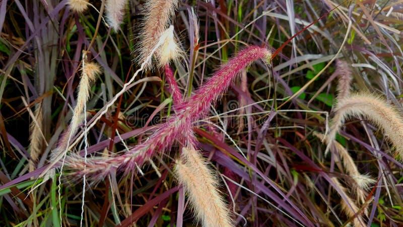 Arbustos salvajes fotografía de archivo