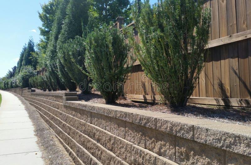 Arbustos sempre-verdes na parede de retenção do tijolo ao longo do passeio imagem de stock royalty free