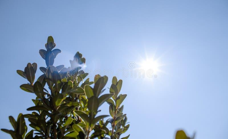 Arbustos verdes bonitos Arbusto verde na luz solar macia, foco na folha próxima imagens de stock royalty free