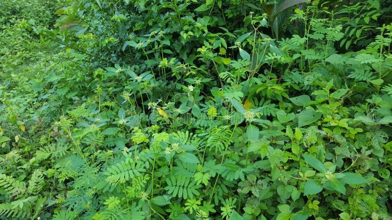 Arbustos verdes decorativos imagem de stock