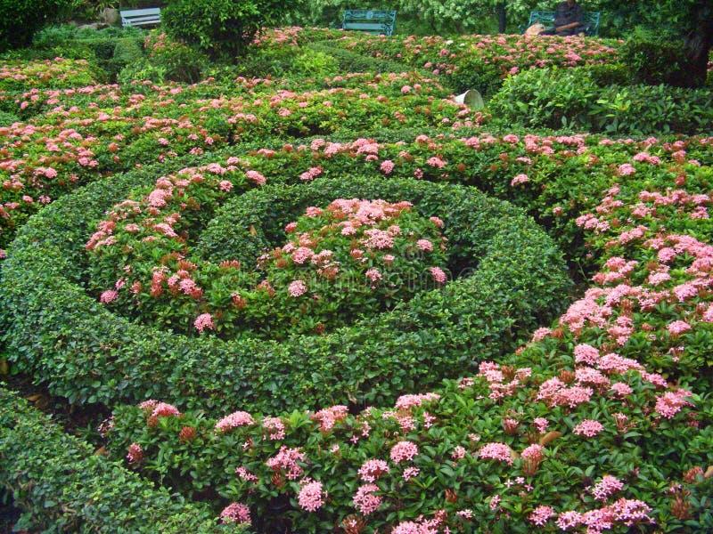 Arbustos de jardin con flores stunning los viburnos for Arbustos con flores