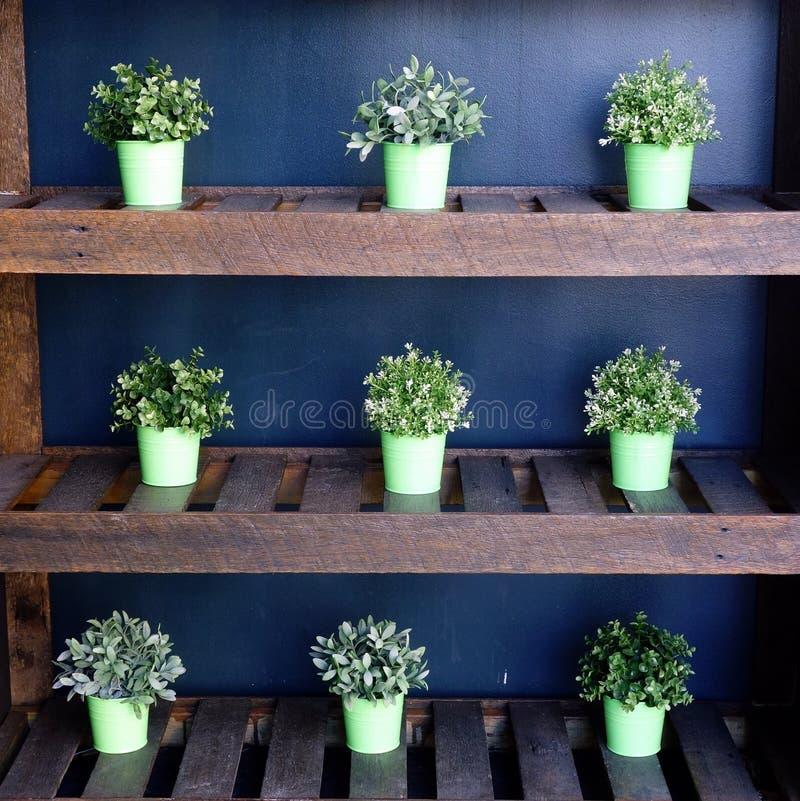 Arbustos verdes em uns potenciômetros imagens de stock