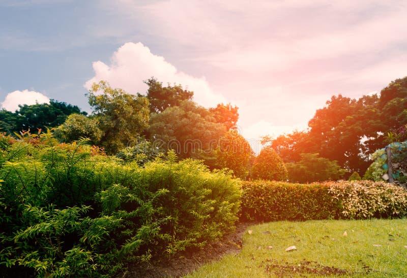 Arbustos y céspedes en parque público por la mañana fotos de archivo libres de regalías