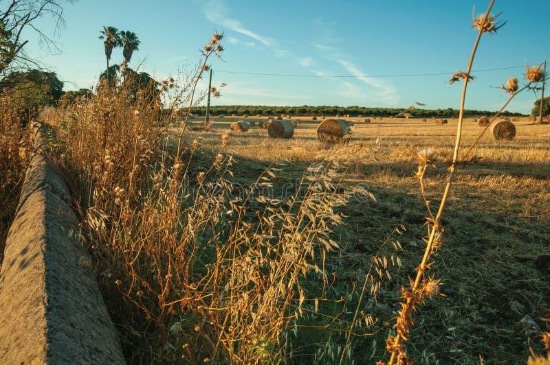Arbustos y pared de piedra al lado de las balas de heno en una granja fotografía de archivo