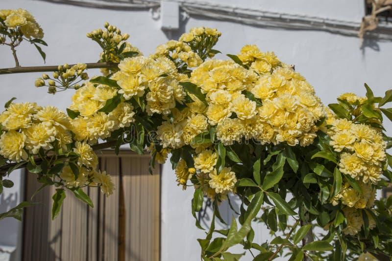 Arc avec les fleurs jaunes en Espagne images stock