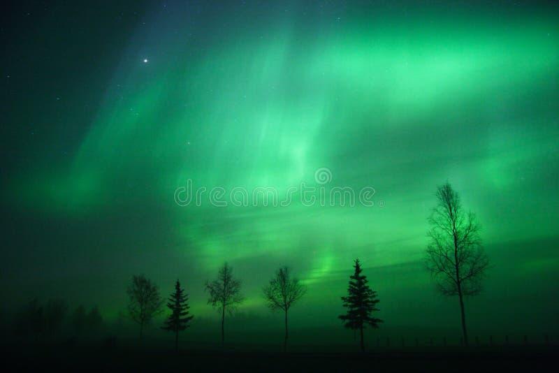 Arc de l'aurore au-dessus de ligne d'arbre image libre de droits