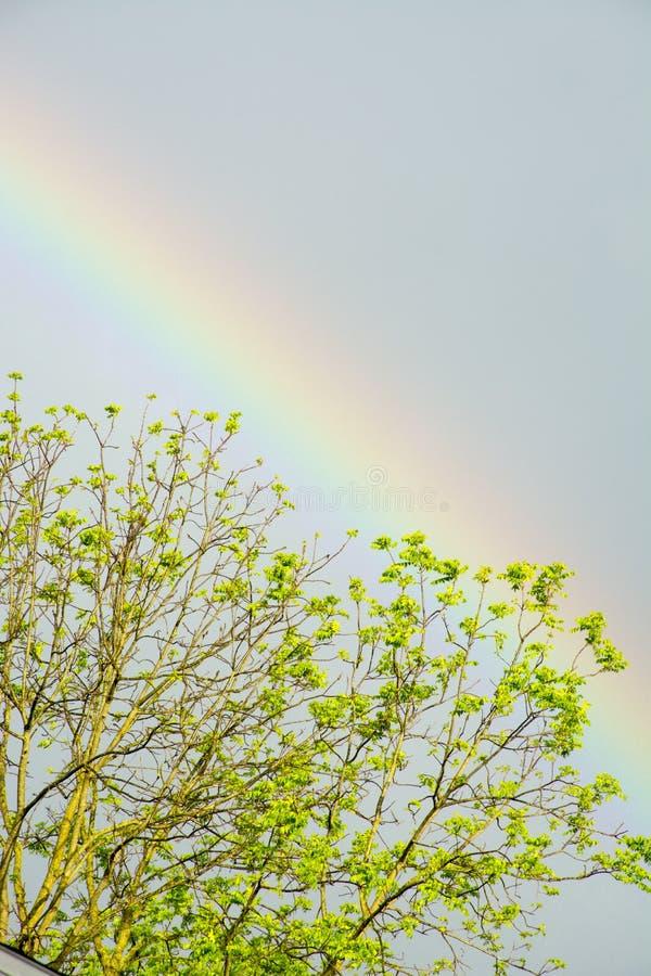 Arc-en-ciel au-dessus d'arbre images stock