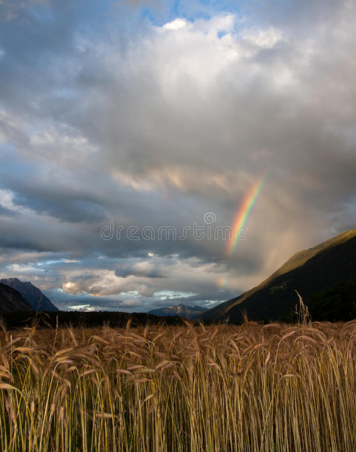 Arc-en-ciel au-dessus de blé photos libres de droits