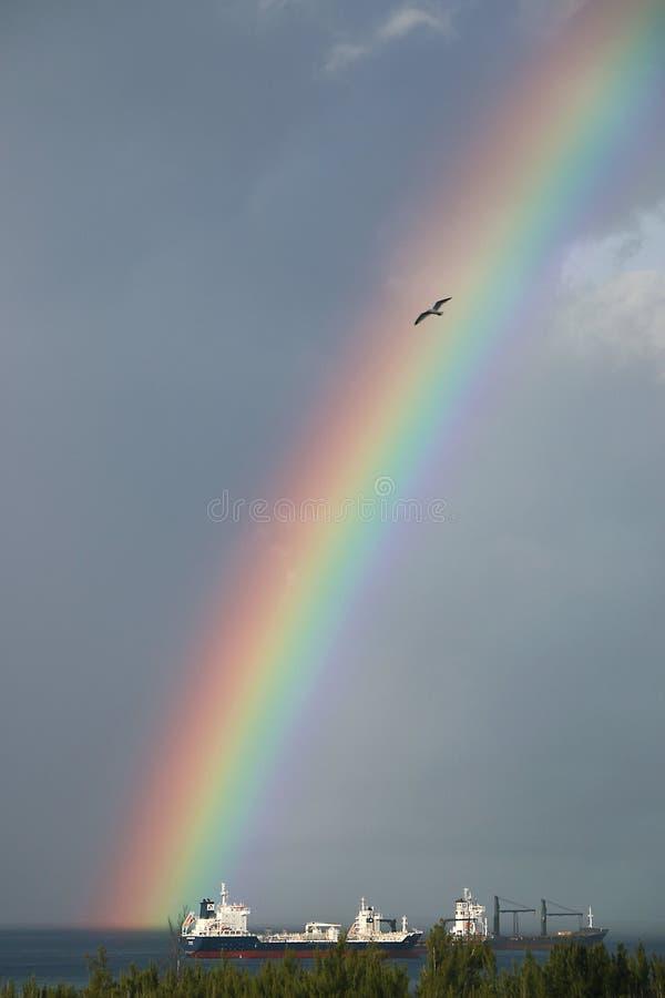 Arc-en-ciel avec la mouette photos libres de droits