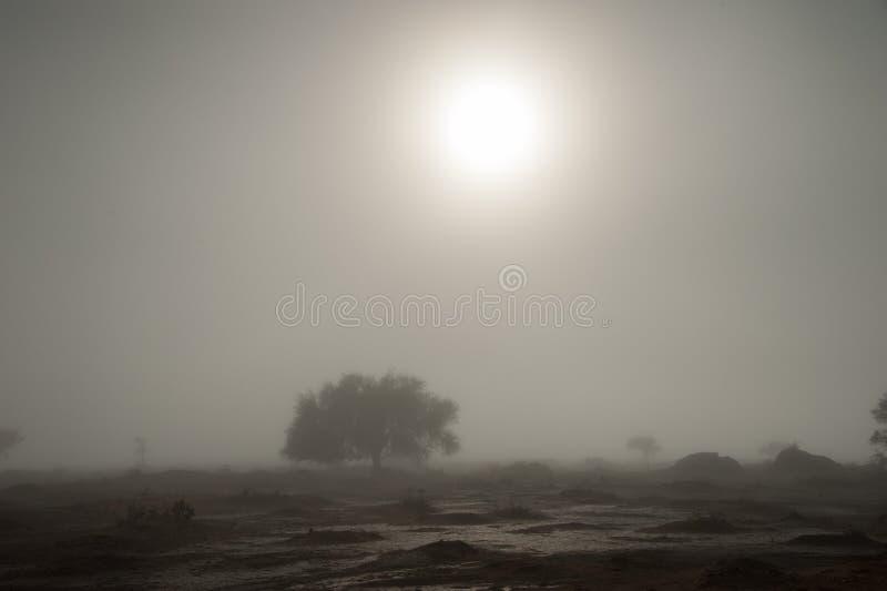 Arc-en-ciel blanc évasif, Vlei mort, parc national de Sossusvlei, Namibie image libre de droits