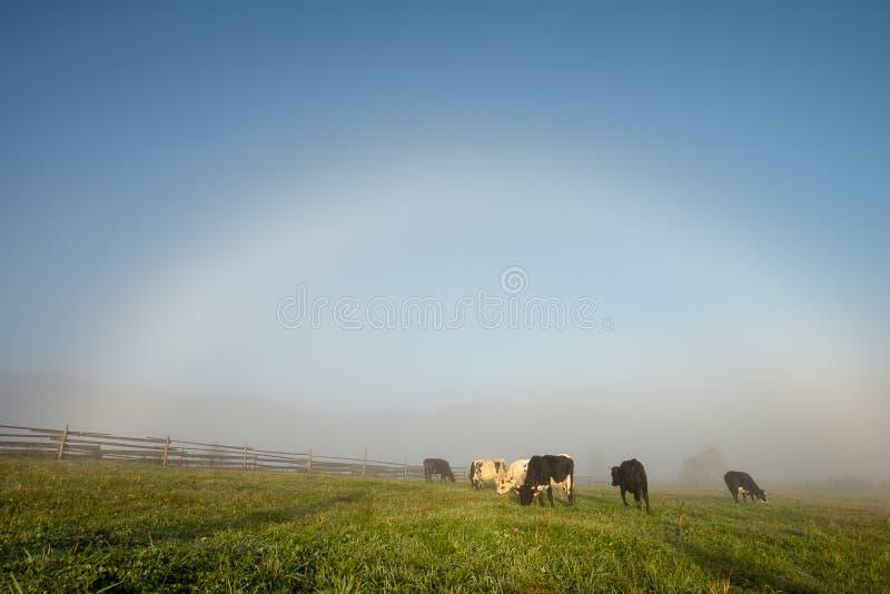 Arc-en-ciel blanc un matin brumeux en Roumanie à la ferme photographie stock